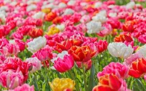 6900317-vivid-flowers